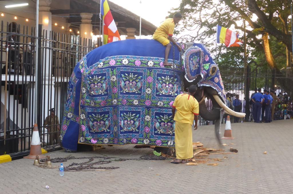 衣装を身に着ける象