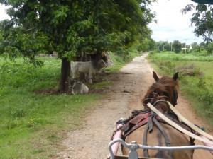 インワでの観光馬車