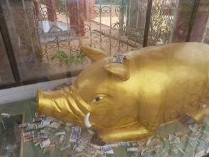 カックー開発に貢献した金の豚の精霊