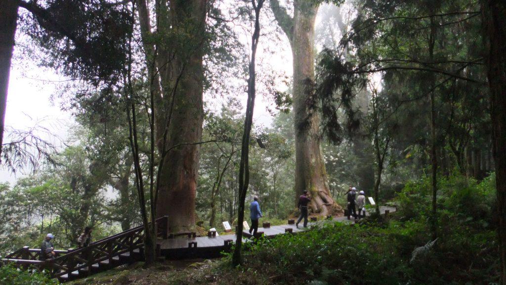 樹木の種類、高さ、胴回り、樹齢などが記載された巨大な樹木