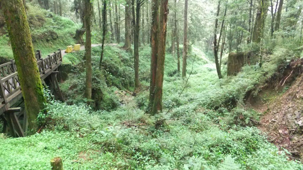 遊覧歩道を通って緑の中を散策