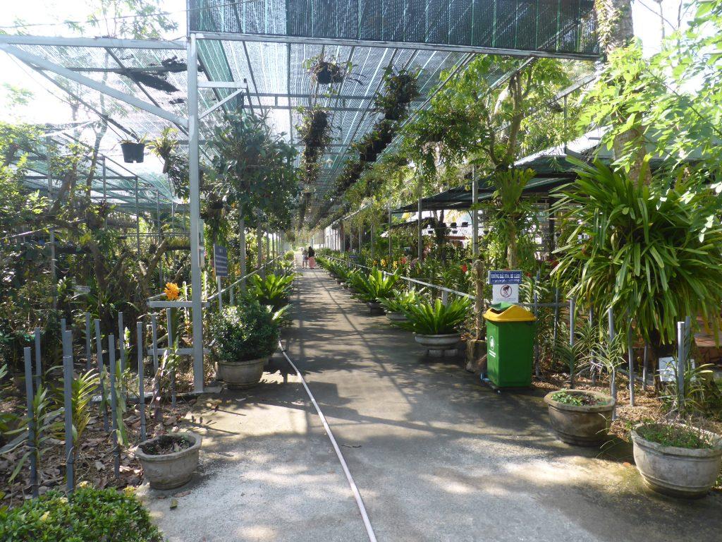 SIMやNONIをはじめ多くの種類の植物が植えられている工場裏の広大な植物栽培用地
